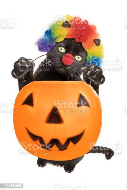 Black cat dressed as clown holding trickortreat pumpkin picture id1031560860?b=1&k=6&m=1031560860&s=612x612&h=cdxj yefp82ygcusoiyvv0o4uynnodpp5kg11rgkw3y=