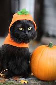 Black cat dressed as a pumpkin for Halloween.