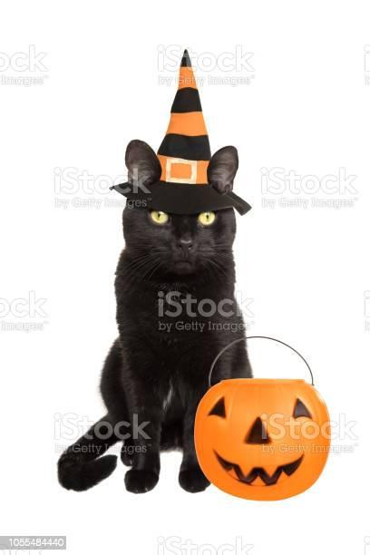 Black cat dressed for halloween picture id1055484440?b=1&k=6&m=1055484440&s=612x612&h=qtu98rmojhtwi4jxam 7faggjuvjahux0g0ciodbvka=