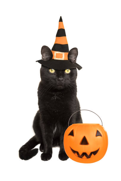 Black Cat Dressed For Halloween A beautiful black cat dressed in a witch hat with a trick-or-treat pumpkin. halloween cat stock pictures, royalty-free photos & images