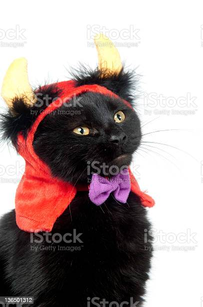Black cat dressed up cutely with horns and red cape picture id136501312?b=1&k=6&m=136501312&s=612x612&h=5elcqwdjh0zvuw72cnvml9lslsdnvrempnckpth4t2w=