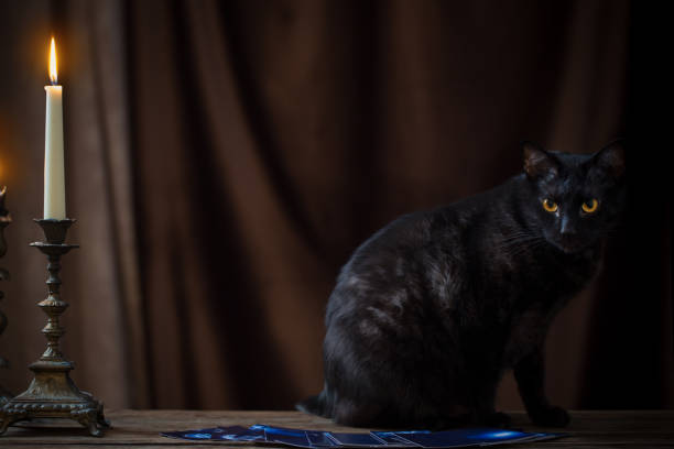 black cat, fortune-telling cards and burning candles on dark brown background black cat, fortune-telling cards and burning candles on dark brown background black cat stock pictures, royalty-free photos & images