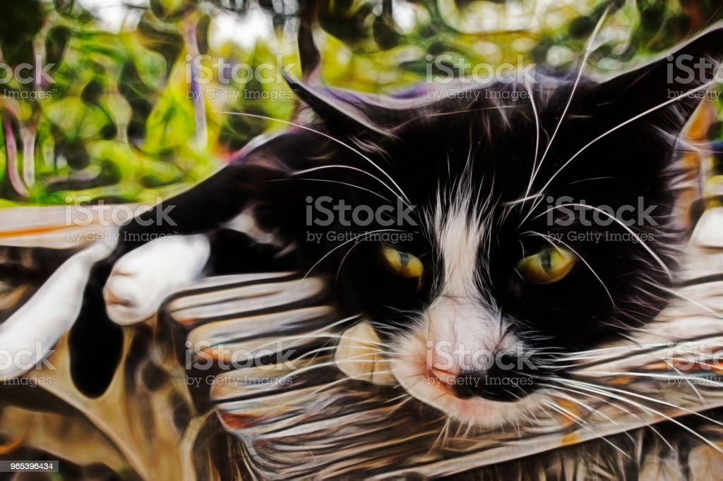 chat noir fractalius - Photo de Animaux de compagnie libre de droits