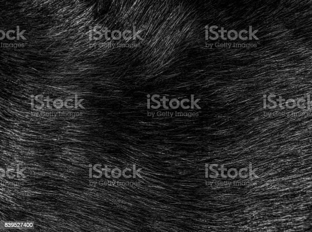 Black cat fur hairs closeup texture and pattern picture id839527400?b=1&k=6&m=839527400&s=612x612&h=trjmy56bqdpzfc0ddeu4mmrch8iocgvxsvcbwxqoch8=