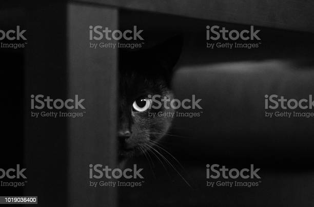 Black cat half face picture id1019036400?b=1&k=6&m=1019036400&s=612x612&h=q2462aosq0la6rwxtfoscllpjatpuik7mmtha5dwg0m=