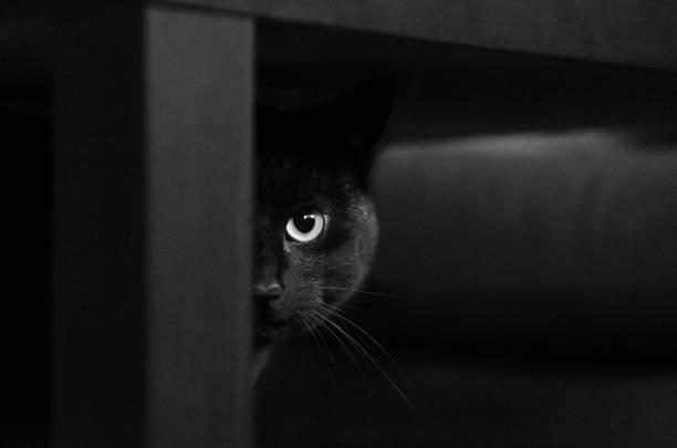 Black cat half face picture id1019036400?b=1&k=6&m=1019036400&s=612x612&w=0&h=tkec0avopb2gemhabuxjwuierr8oj4hkjrla p0kbsu=