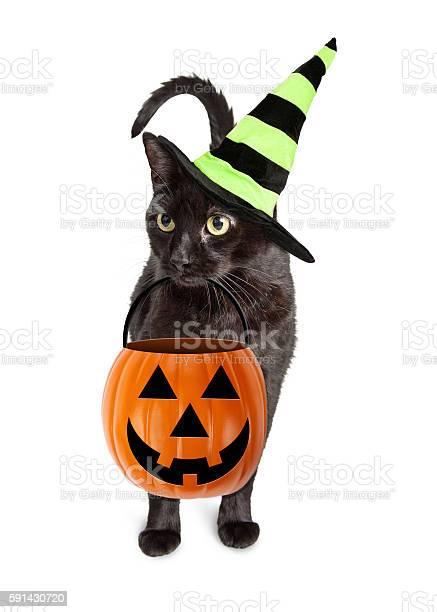 Black cat halloween witch picture id591430720?b=1&k=6&m=591430720&s=612x612&h=8vuijq3l cjezdfsov3sriqasivjand6dkwcmbekzwg=