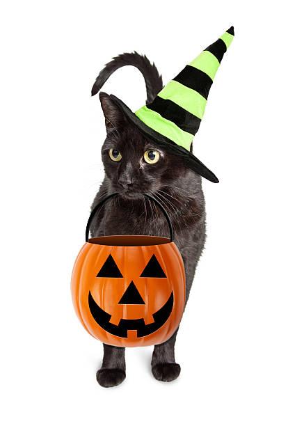 Black cat halloween witch picture id591430720?b=1&k=6&m=591430720&s=612x612&w=0&h=7pcznifyvpqg3xdjf 26gwmnwxrfmqhzaq82ljsneuq=