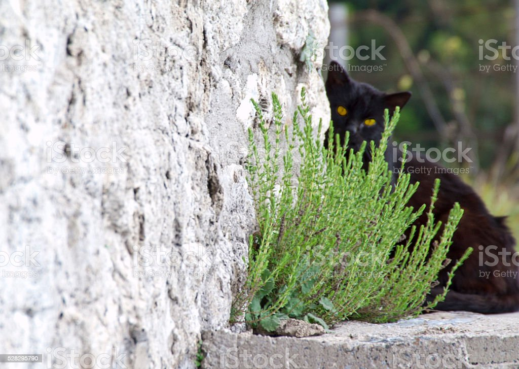 black cat hidind stock photo