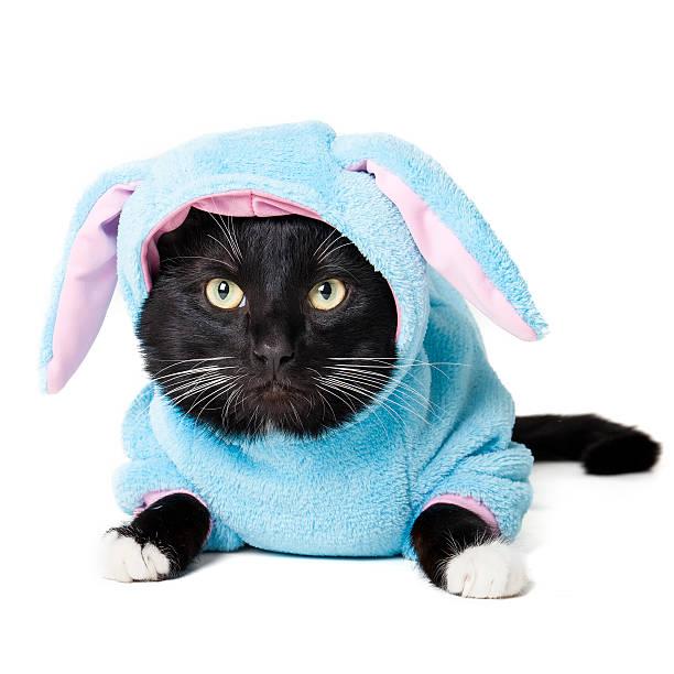 Black cat in a bunny suit picture id477420039?b=1&k=6&m=477420039&s=612x612&w=0&h=ycm21qdia7aj3lr3gpxy 42np5nrr6vixbgadhb s2q=