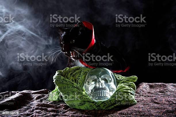 Black cat in a costume on halloween picture id608516278?b=1&k=6&m=608516278&s=612x612&h= x1d0tsritozbujwh6kttdfql5xbkryvmnoyj5ysik0=