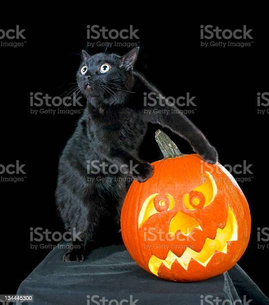 Black cat in a dark room steals orange pumpkin maniac picture id134445300?b=1&k=6&m=134445300&s=612x612&h=wwfbfntgtozlnrr4kshwmkrvwyqx1mttdnotvwxohkq=