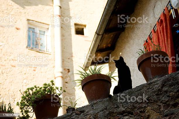 Black cat in a village picture id176090852?b=1&k=6&m=176090852&s=612x612&h=ihdcpw8hftqsv4zkcsq7eb2oklw mfvgg6dj7vjl4vq=