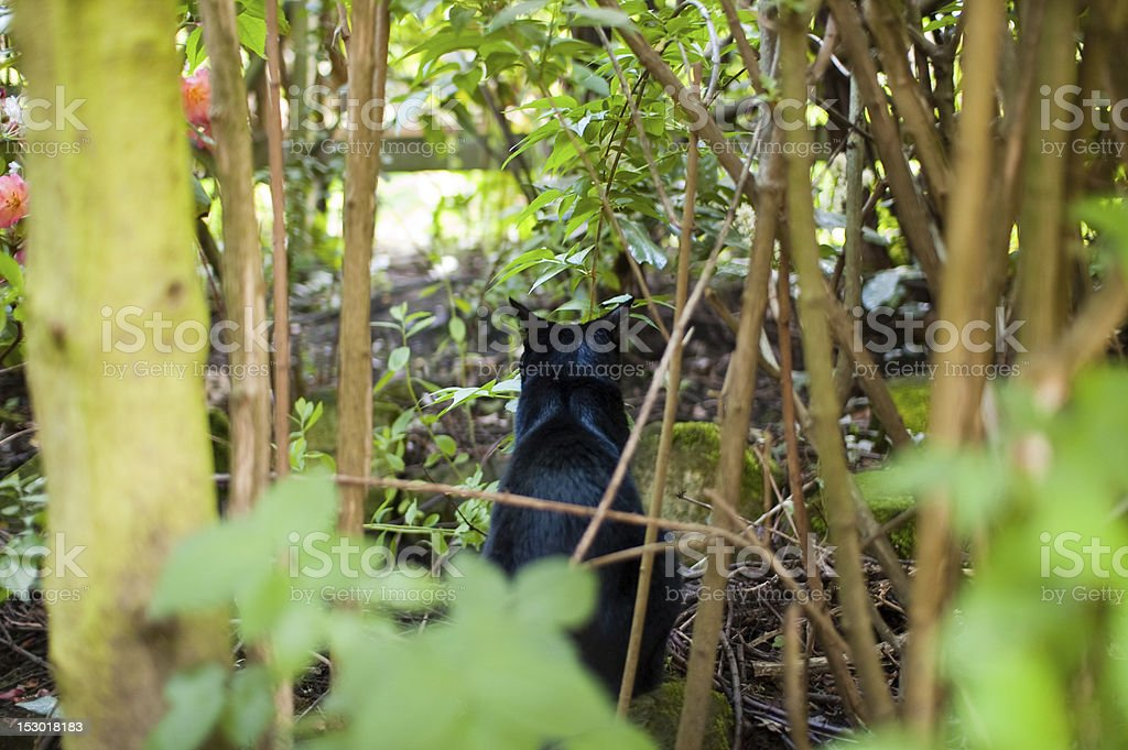 Black Cat in dense garden shrubbery with back turned stock photo
