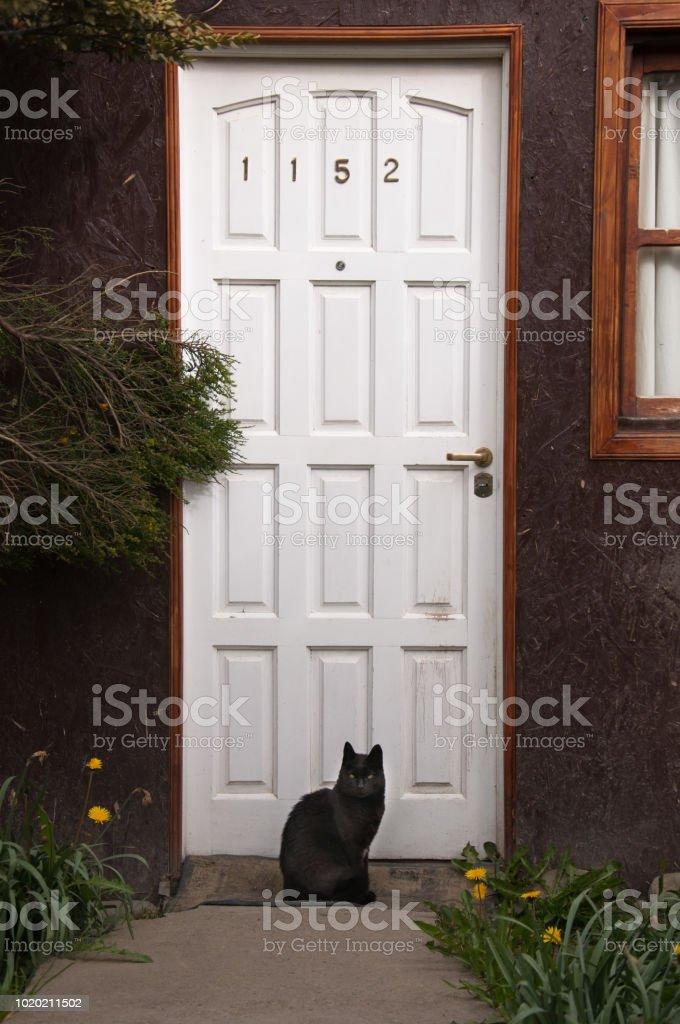 gato negro frente a una puerta blanca - foto de stock