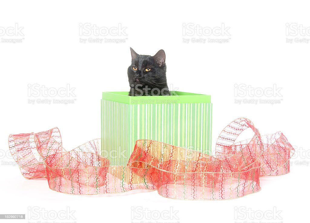 Black cat in gift box royalty-free stock photo