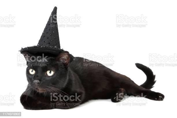 Black cat in halloween hat isolated on white background picture id1174070302?b=1&k=6&m=1174070302&s=612x612&h=sv4agb8kekqofnreq3gfzzltuislbprwukxn6eddxhs=