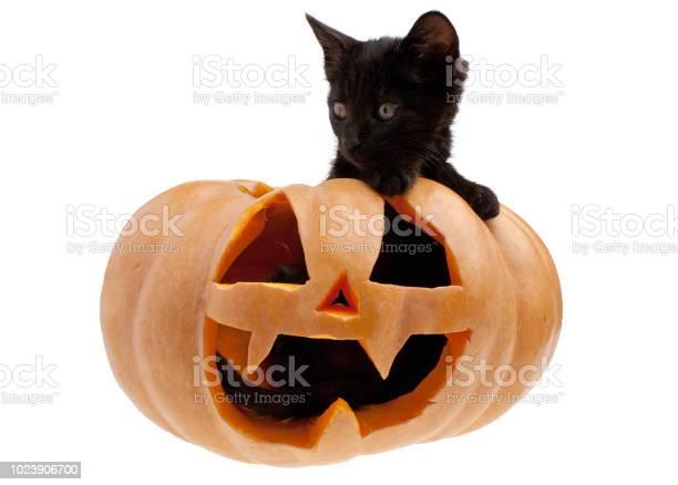 Black cat in halloween pumpkin picture id1023906700?b=1&k=6&m=1023906700&s=612x612&h=htyg5mnwfoyv2iugqa8m2p0 2yamn v3jimowtsriky=