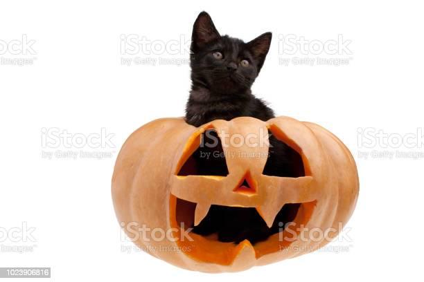 Black cat in halloween pumpkin picture id1023906816?b=1&k=6&m=1023906816&s=612x612&h=qlgm18n7h531dpkd3j3qnbza98olvp74zklrtpr6w88=
