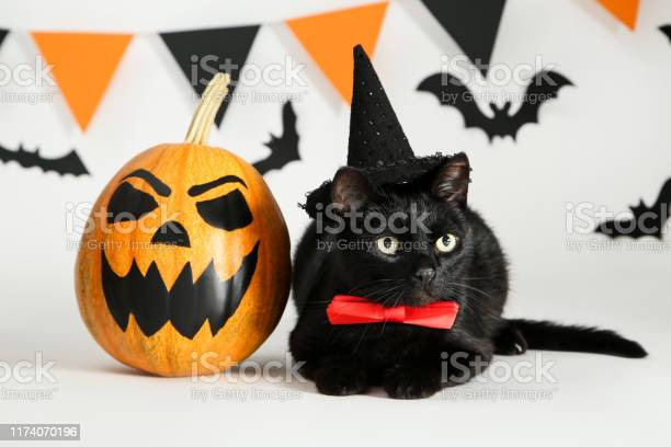 Black cat in hat with pumpkin paper bats and flags on white picture id1174070196?b=1&k=6&m=1174070196&s=612x612&h=5uloyutegn5n22jut4ccbcq7t8qgsyyzy s41wrqajg=