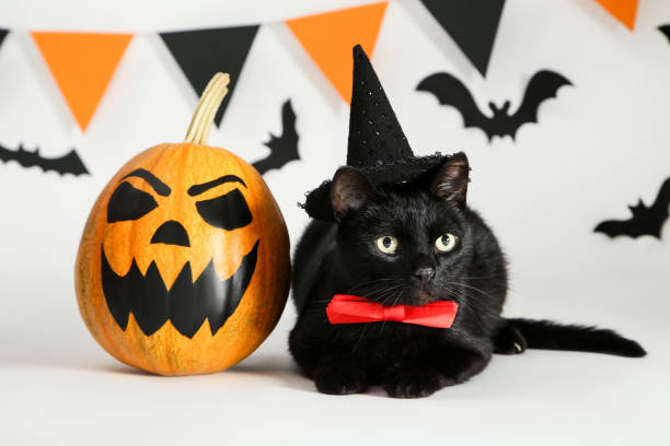 Black cat in hat with pumpkin paper bats and flags on white picture id1174070196?b=1&k=6&m=1174070196&s=612x612&w=0&h=kk8w rbxaqnobr93 mrwyldt kml02xrtlwu8j97mcw=