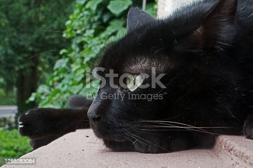 istock Black cat in relaxed pose 1253283084