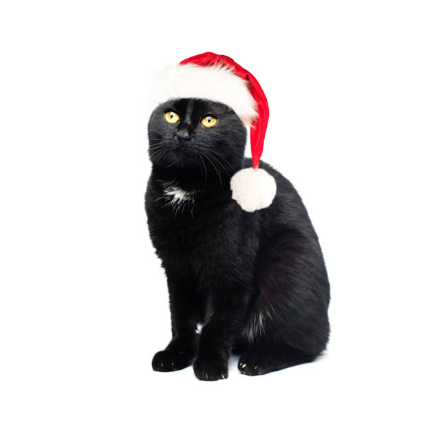 Black cat in santa hat on white background christmas concept picture id852177442?b=1&k=6&m=852177442&s=612x612&w=0&h=4h4lsumtfppedeyvoi11ewdwpadbejxct82tj6l179q=