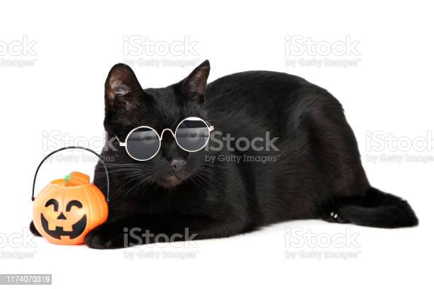 Black cat in sunglasses with halloween pumpkin on white background picture id1174070319?b=1&k=6&m=1174070319&s=612x612&h=sv6s8 xn9fendfm1twcsknmvqsaq3crck7bzzzbzjse=