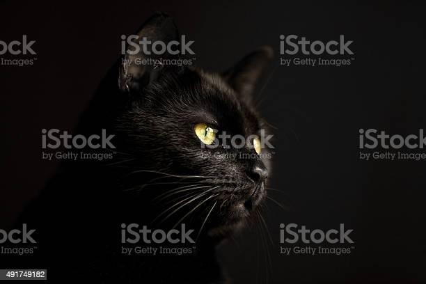 Black cat in the dark picture id491749182?b=1&k=6&m=491749182&s=612x612&h=pekp5m gxskq55eq6rbdkby7fn5wgrrifbpo5fhteb8=