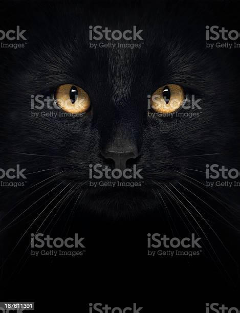 Black cat in the dark with glowing yellow eyes picture id167611391?b=1&k=6&m=167611391&s=612x612&h=6m6alet60bfupqypytrnlmyxdggypoexsy13r0u d7a=