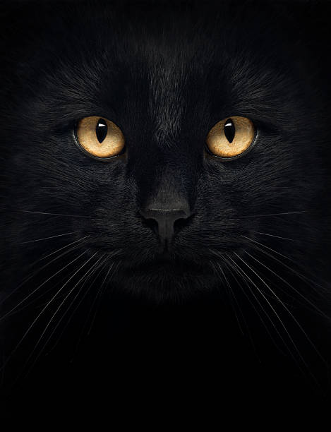 Black cat in the dark with glowing yellow eyes picture id167611391?b=1&k=6&m=167611391&s=612x612&w=0&h=yibo1twmvyawu1oocbmyf3vb tejku36qor1lo2t0fi=