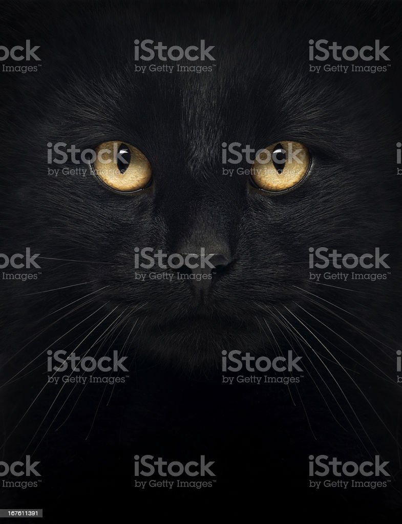 Black cat in the dark with glowing yellow eyes stock photo