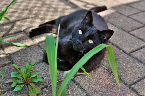 black cat in the shade