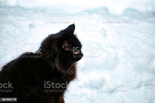 Black cat in the winter on white snow picture id937694776?b=1&k=6&m=937694776&s=612x612&h=zum ta4m71oivcaoksehxnxjjnwcj1ytqaqn4p4h4ni=