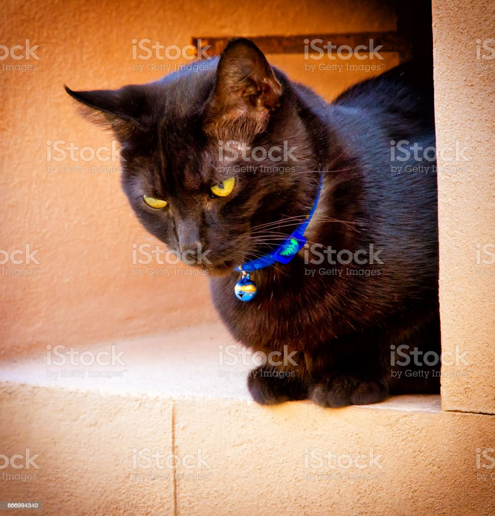 Black cat in Valldemossa stock photo