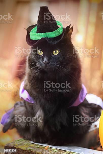 Black cat in witch costume picture id186697901?b=1&k=6&m=186697901&s=612x612&h=nieog8lglfzpf4ht6oczvkspqqvm4ekmkld0bogc 4y=