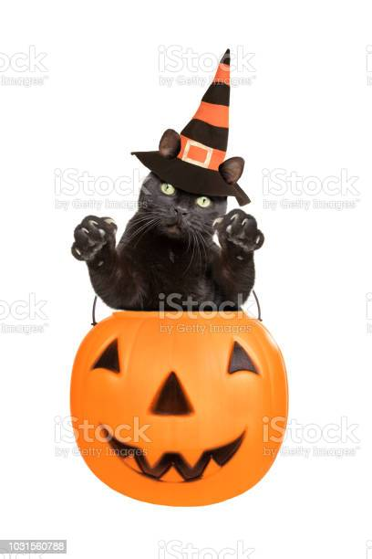 Black cat in witch hat jumping out of pumpkin picture id1031560788?b=1&k=6&m=1031560788&s=612x612&h=beagm thxtjeu6vewiqy fxwdopaulaq xh7lpatdry=