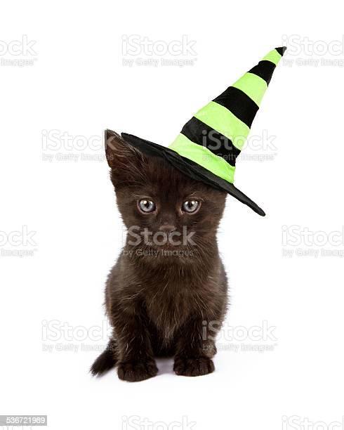 Black cat in witch hat picture id536721989?b=1&k=6&m=536721989&s=612x612&h=mr07eewupvahyoo77tyfvn11zrzhv7fzpcejs0mufra=