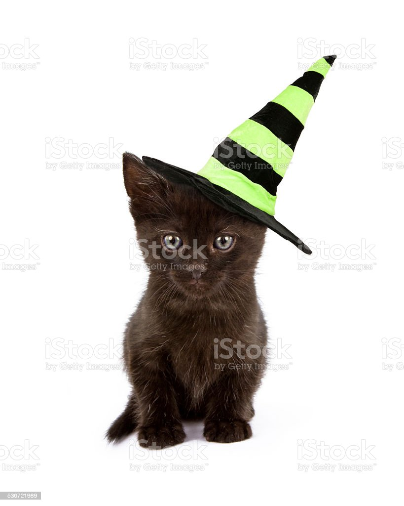 Black Cat in Witch Hat stock photo