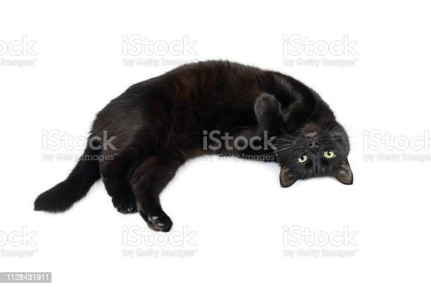 Black cat is lying relaxed on his back picture id1128431911?b=1&k=6&m=1128431911&s=612x612&h=p9mqwjo 7mqr4rt7s6fzfd8ltzovucc 5wtmmo7tq3k=