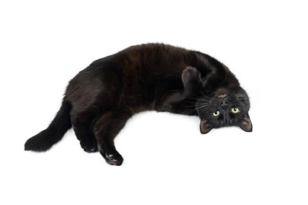 Black cat is lying relaxed on his back picture id1128431911?b=1&k=6&m=1128431911&s=612x612&w=0&h=p3hbeoglfyqkrjhqowvuecori5c6o5qegaiap1xu1z4=