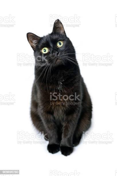 Black cat is sitting on a white background picture id909695260?b=1&k=6&m=909695260&s=612x612&h=ampznetdhzgq0 5 bugwwp1iujazhi4gfqzqqygoa88=