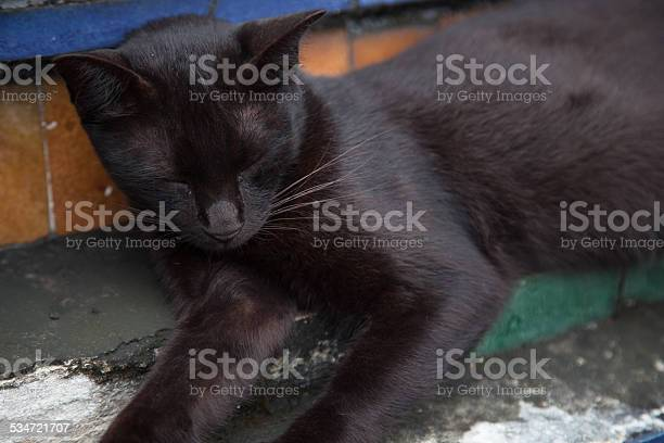 Black cat is sleeping picture id534721707?b=1&k=6&m=534721707&s=612x612&h=jjgfqq ydceccjpqxsxepwa7cpekvwm4t3zwnkneu i=