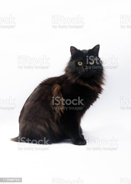Black cat isolated on white background clipping path copy space for picture id1125967531?b=1&k=6&m=1125967531&s=612x612&h=7fcwhdydmonrtqeiny8eyjfdctdl2chdk klcebjqow=