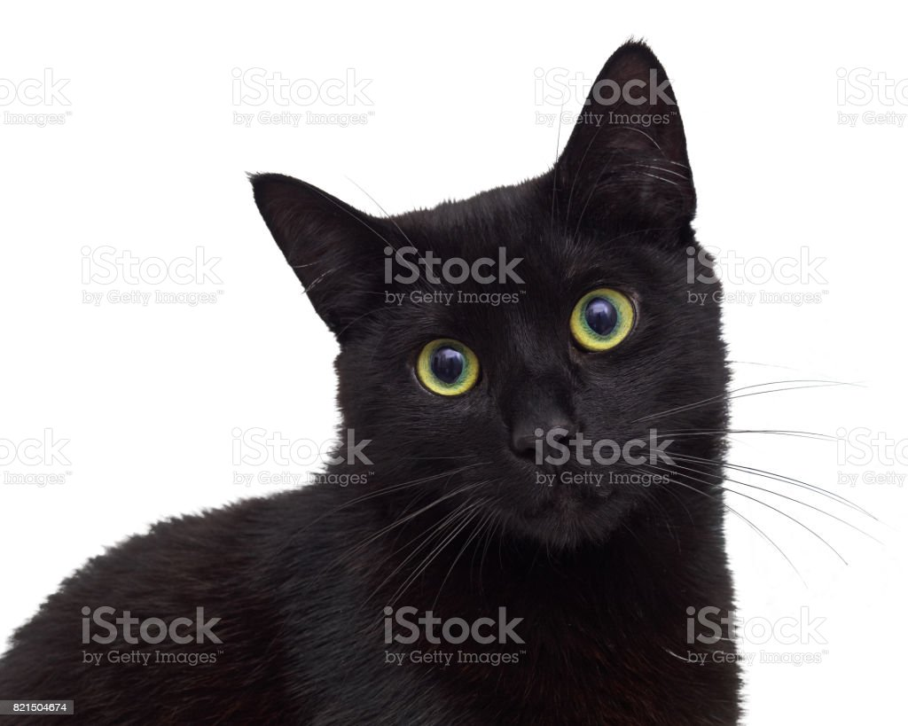 Black cat isolated on white sitting and looking at you stock photo