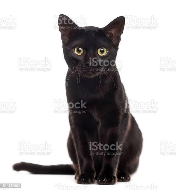 Black cat kitten looking at the camera isolated on white picture id514332662?b=1&k=6&m=514332662&s=612x612&h= cy8g6r8 flp4gyfzchjh39tmpxc pfqyfvtpvkwdse=
