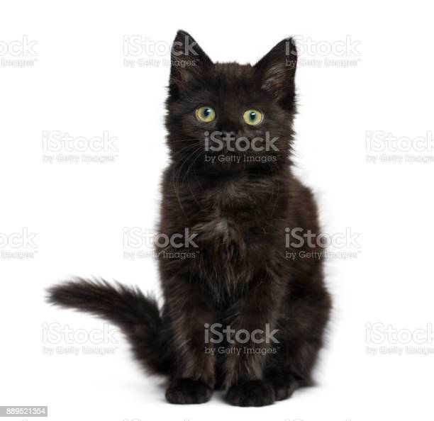Black cat kitten sitting and looking at the camera isolated on white picture id889521354?b=1&k=6&m=889521354&s=612x612&h=u9pprrbvrkfkagpw10zlfjccjszfytodqtytz0cwrrw=