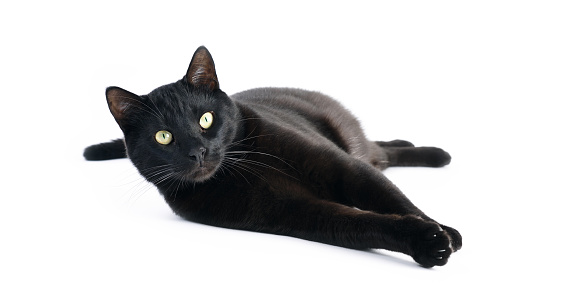 Black Cat Laying Down On White Background Stock Photo - Download Image Now  - iStock