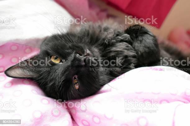 Black cat laying on a bed picture id804354280?b=1&k=6&m=804354280&s=612x612&h=wo8nl0d8jodov uzyjcehqx7u9 khrcw5f kd czfws=