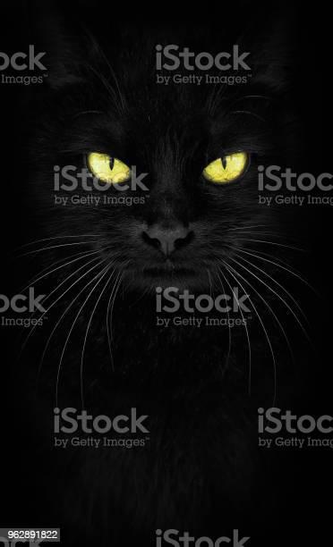 Black cat looking at the camera closeup cat portrait fiery glance picture id962891822?b=1&k=6&m=962891822&s=612x612&h=v7lqcbmszfmrd w8pla7f1umrdyofhuu3wuo cwmdga=